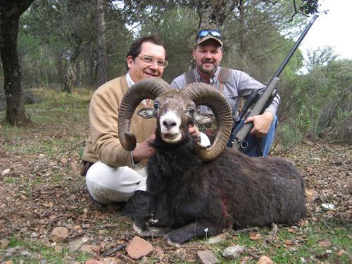 mouflon07