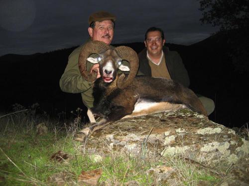 mouflon09