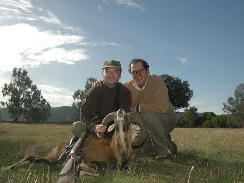 mouflon15