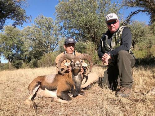 mouflon17