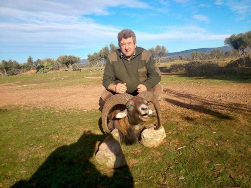 mouflon18