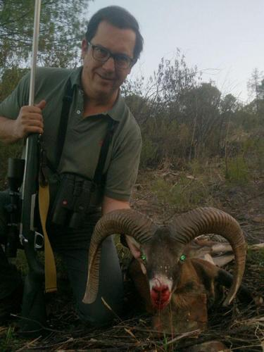 mouflon20