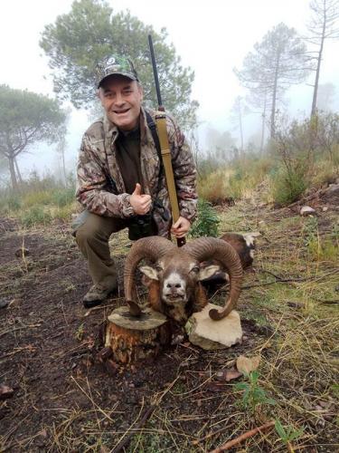mouflon21
