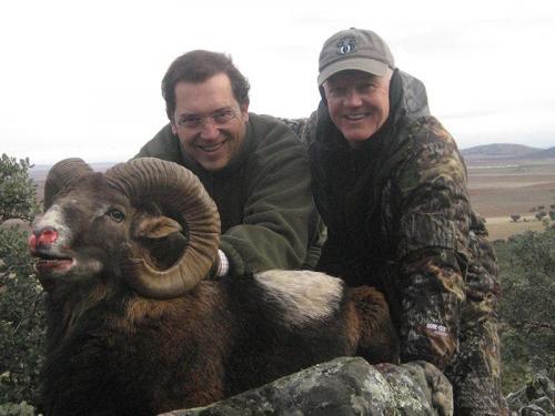 mouflon31