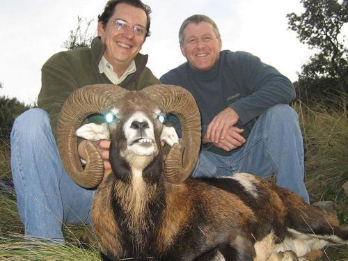 mouflon32