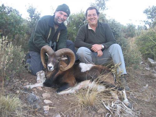 mouflon33