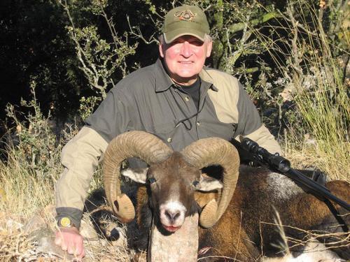 mouflon34