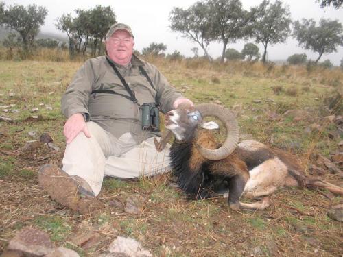 mouflon37