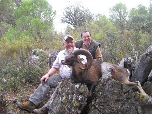 mouflon39