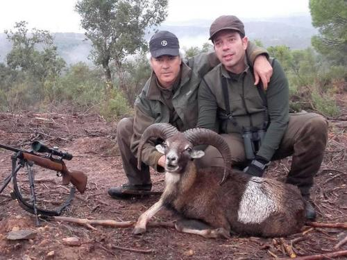 mouflon45