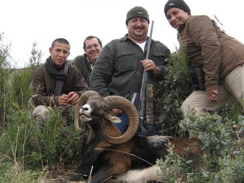 mouflon46