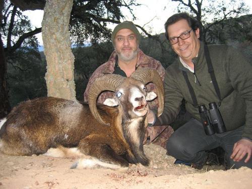 mouflon47