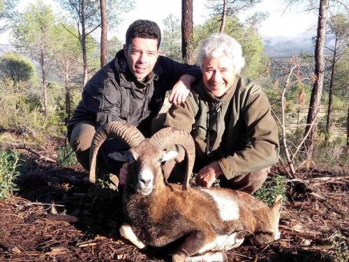mouflon48